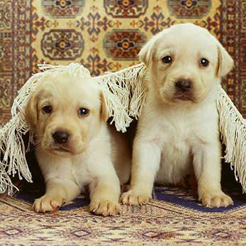 Pet Urine and Odor Treatments